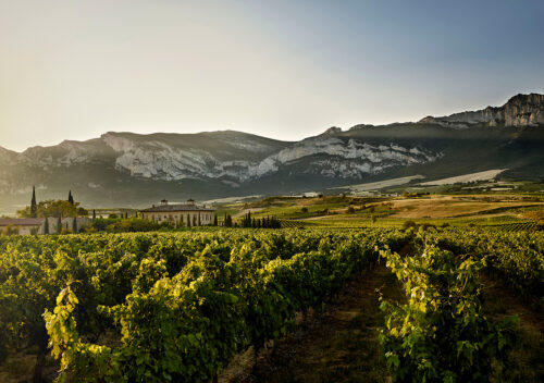 martelo-vineyard-TO-12