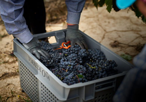 martelo-vineyard-TO-15